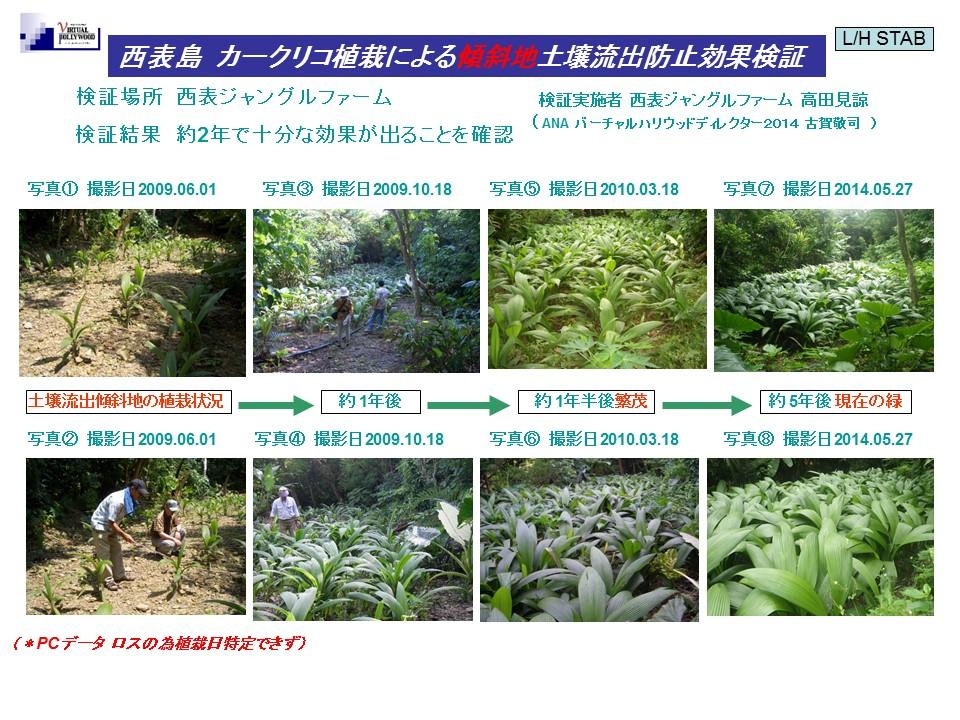西表島にてカークリコを使った土壌流出防止の検証 (大雨による土壌流出後の傾斜地にカークリコを植えての検証、約2年で繁茂確認。)