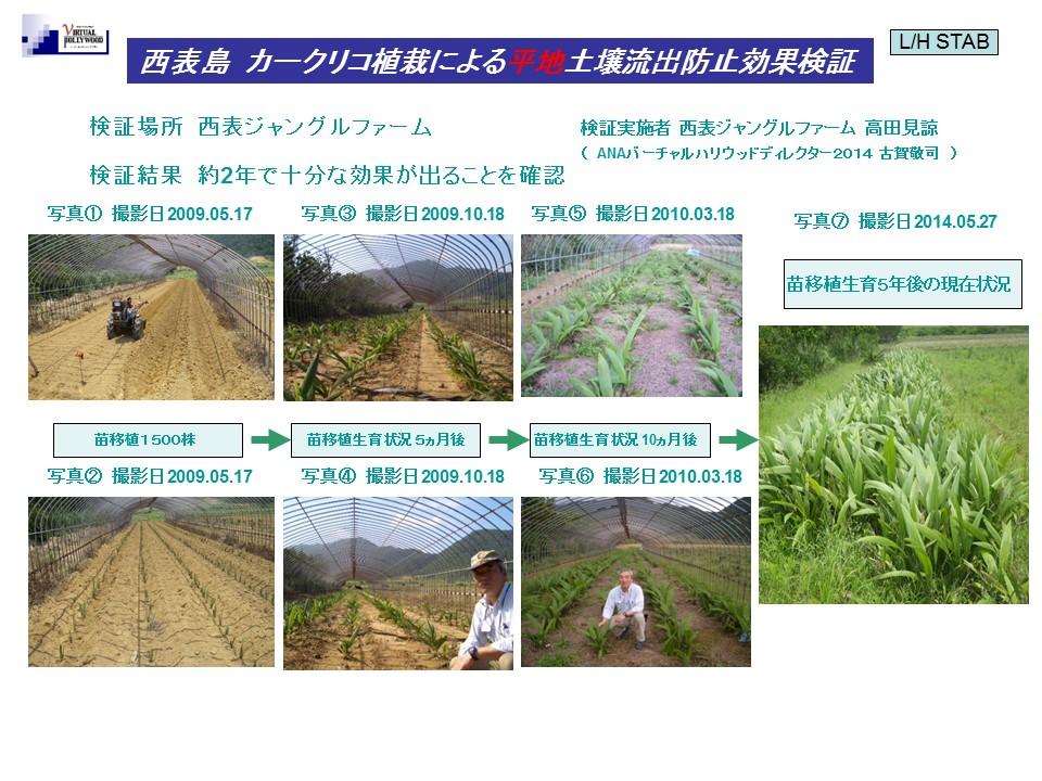 西表島にてカークリコを使った土壌流出防止の検証 (平地にカークリコを植えてのグリーンベルトとしての検証、約2年で繁茂確認)